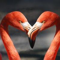 Saint-Valentin: chronique inutile (mais de circonstance) sur un jour (pas) comme les autres